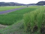 Kushiragawa4_033_2