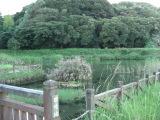 Kimotukigawa3_027