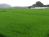 Ashinominato_003