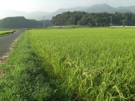 0906shishimetanbo_002