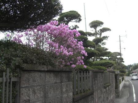 306iwatsutsuji_008