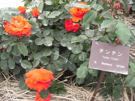 424kanoyabaraen2009_021_2