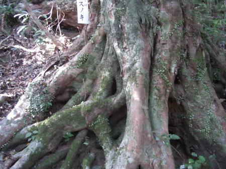 510kinturubashishouyouju_014